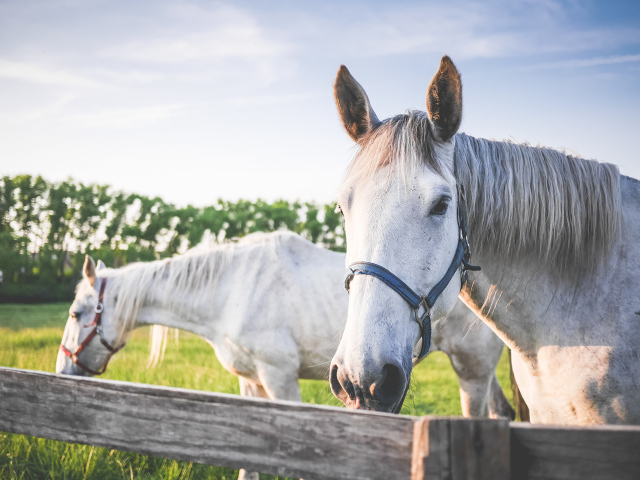 Know About Buying a Horse